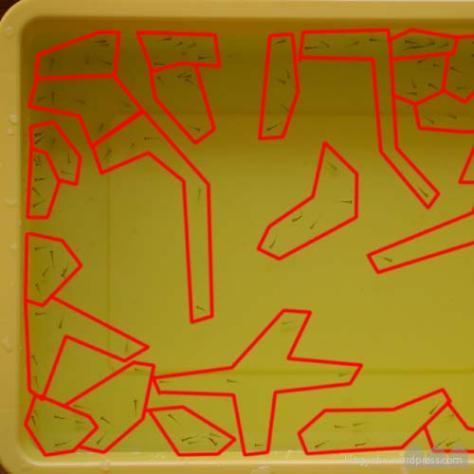 稚魚の数を数える方法