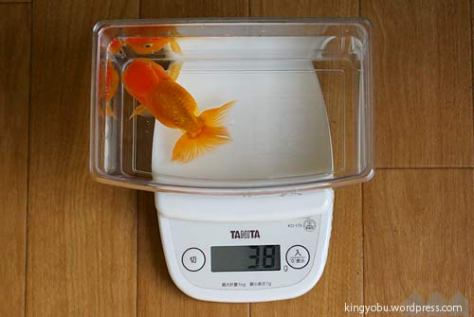 weight_ranchu