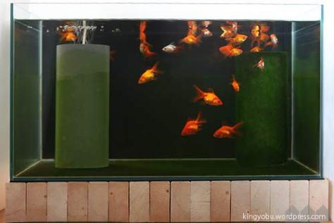 glass_6036_catF